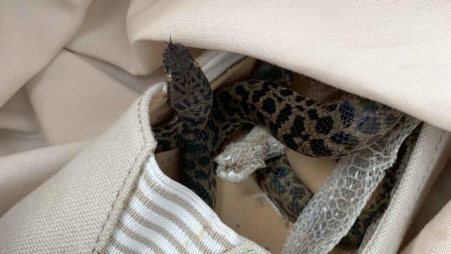 Snake on plane