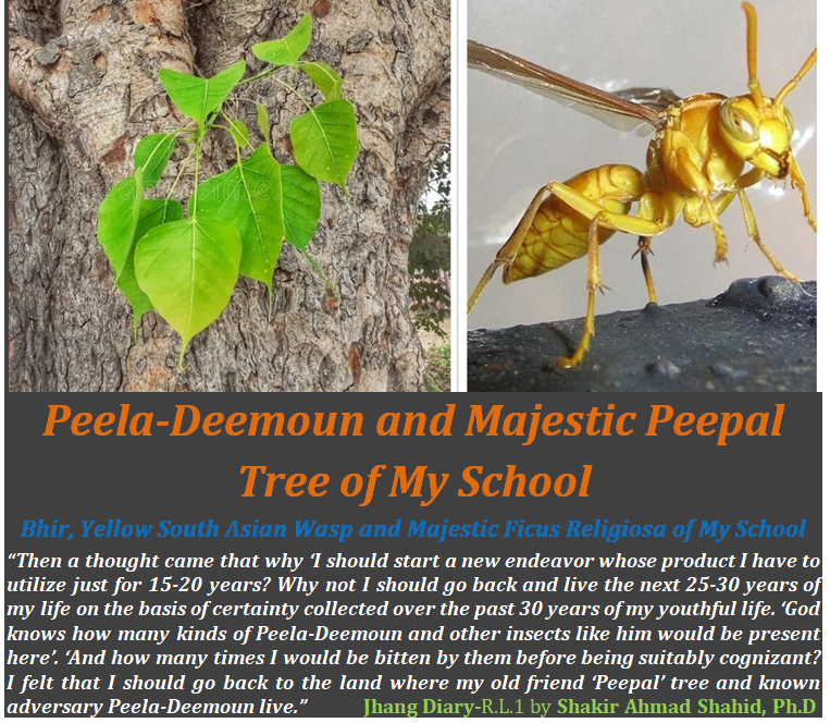 Peela-Deemoun and Majestic Peepal Tree of My School
